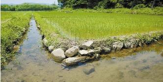 水稻生育期田面的水量平衡方程式-乐题库